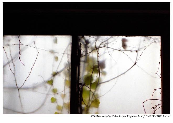 aria2011120401.jpg