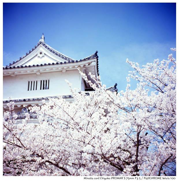 chiyoko2014040107.jpg